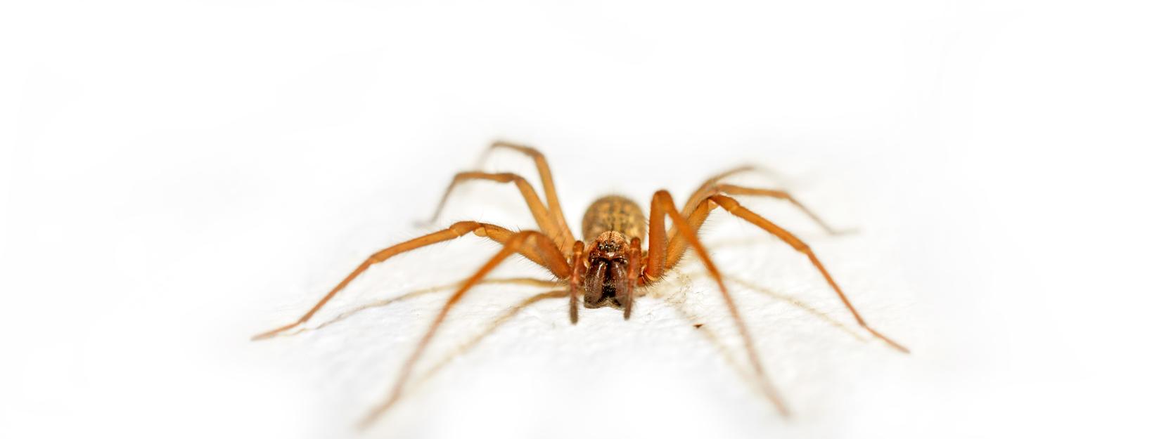 Araña de rincón: viviendo con el enemigo - Diciembre | Clínica ...